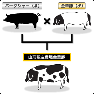 敬友農場の豚について【山形敬友...